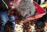 fotogalerie Navštívil nás na zahradě ježek ☻